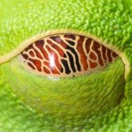 Opening Eyes, Minds, and Hearts to Earth's Biodiversity