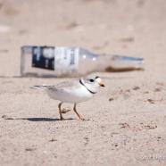 Clean Our Shores