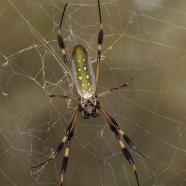 Spider Silk – the Next Sustainable Resource?