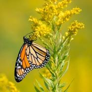 RTPI Protecting Pollinators