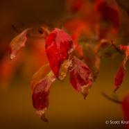 Finally Fall Foliage