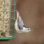 National Bird Feeding Month