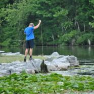 An introduction to Chautauqua Lake's Aquatic Invasive Plants