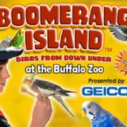 RTPI Hosts Social Meetup at the Buffalo Zoo August 20th to Explore Boomerang Island,  A Special Exhibit Showcasing the Birds of Australia