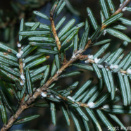 RTPI Joins the High Allegheny Hemlock Conservation Partnership to Offer Hemlock Woolly Adelgid Early Detection Training
