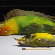 RTPI to Host Bird-Skinning Demonstration/Workshop 10/20/18