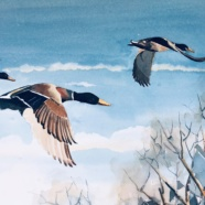 Adult 55+ Nature Art Classes to be Offered at RTPI