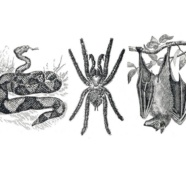RTPI to host: Snakes, Spiders, and Bats! Oh, My!