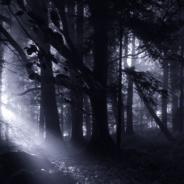 "RTPI to Host ""Illuminating the Dark Side of Nature"" Book Club"